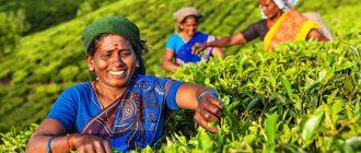 Работа в Индии для русских: список профессий 2019, зарплата, как найти