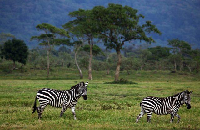 Кения расположена на востоке африканского континента